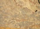 Сонора Голд (Sonora Gold)