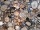 Натуральный Агат (Natural Agate)