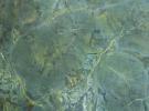 Грин Пис (Green Peace)